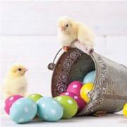 Suministros y decoraciones para fiestas de Pascua