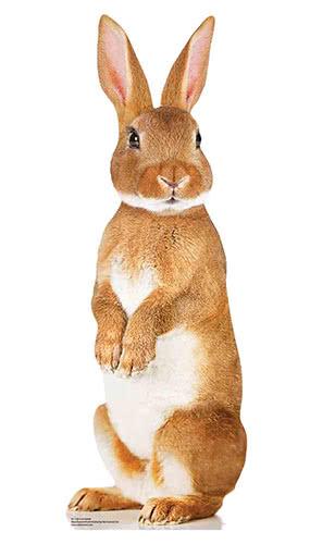 Lindo Conejo Estrella Mini Cartón Recorte 90Cm