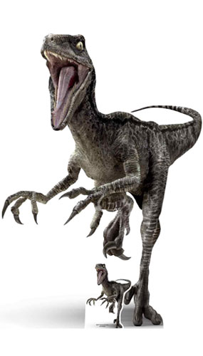 Raptor Dinosaurio Talla Natural Cartulina 135cm Misfiestas Es It is now known that velociraptors had feathers, lending them the appearance of a vicious primordial turkey. raptor dinosaurio talla natural cartulina 135cm